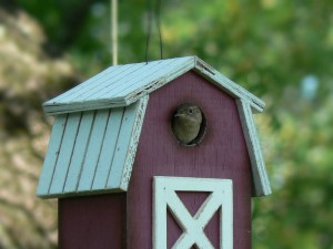 Carolina Wren's home.